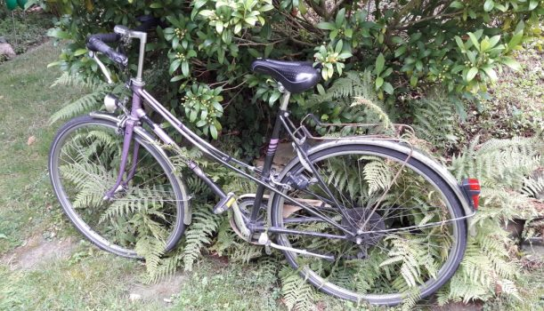 Radwandern in den Sommerferien